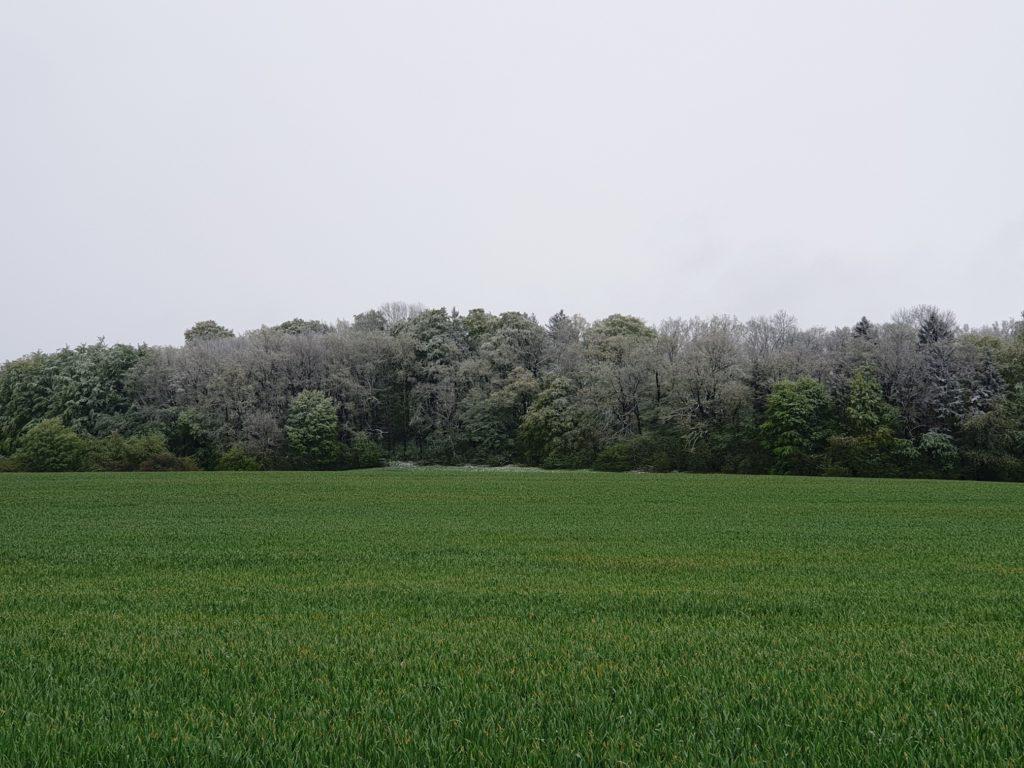 Wetter Wachstedt